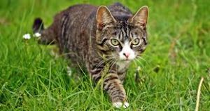 cat fact, CAT HUNTING, LEVEL HEAD, PET STORE   Goodness for Pets
