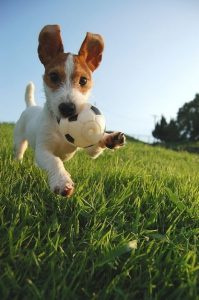 New Puppy Checklist, Best Dog Toys, Top Dog Toys By Category | Goodness for Pets