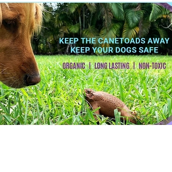 Cane Toads, Bufo Toad, Pet Store, Pet Shop | Goodness for Pets
