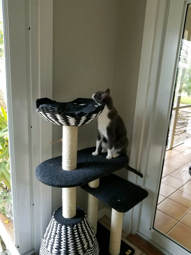 New Kitten Checklist, Cat Tower, Kitten Supplies, Pet Store   Goodness For Pets