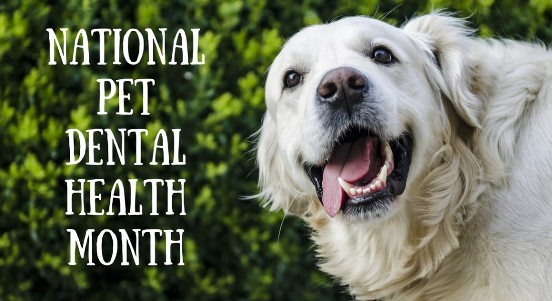 Pet Dental Health, Pet Store, Oral Hygiene for Pets | Goodness for Pets