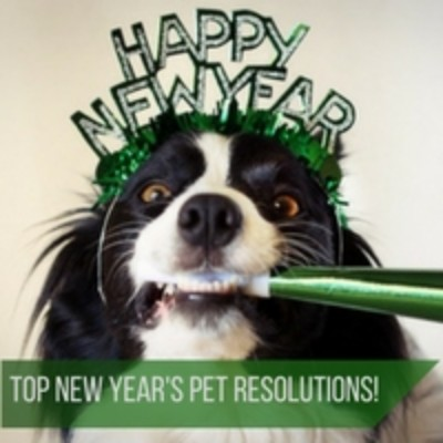 New Year's Resolutions For Your Dog Pet Store | Goodness For Pets