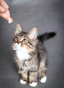 New Kitten Checklist, Cat Treats, Pet Store | Goodness For Pets