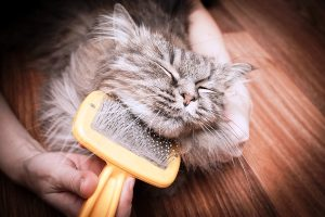 New Kitten Checklist, Cat Grooming Tools, Brushing a Cat, Pet Store | Goodness For Pets