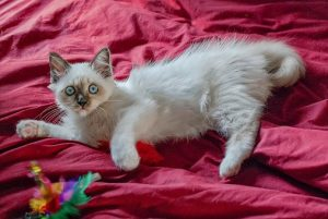 New Kitten Checklist, Cat Toys , Pet Store | Goodness For Pets