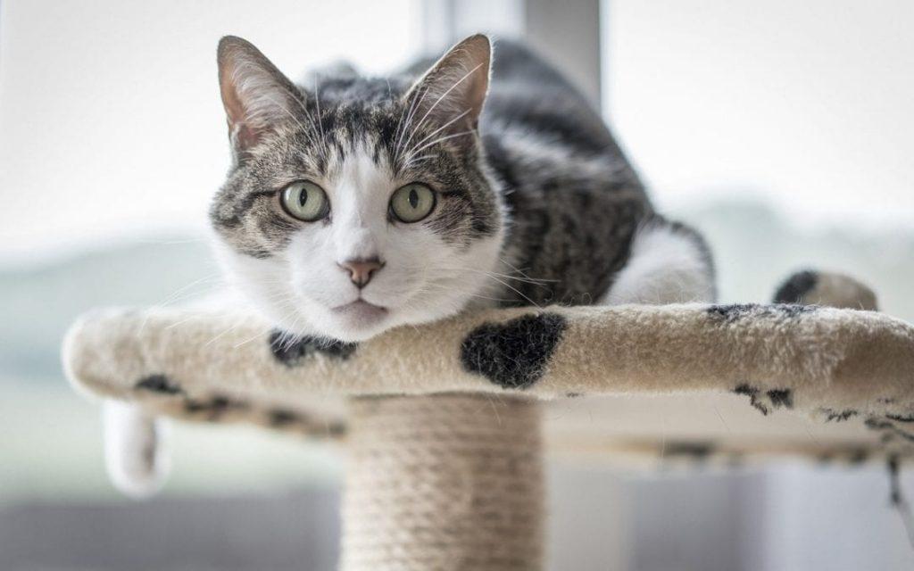 flea infestation, cats, cat tower, indoor cat, pet store, pet shop   Goodness for Pets
