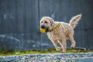 Fetch Toy | Goodness for Pets