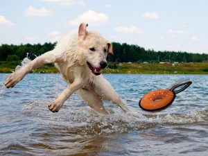 Dog Water Toy Pet Store | Goodness for Pets