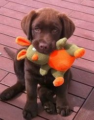 New Puppy Checklist, Prepare For Puppy, Dog Toys | Goodness For Pets