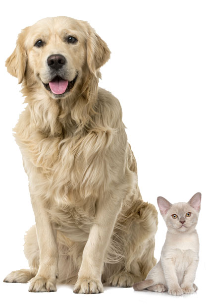 Dogs and Cats Alike-Love Goodness for Pets Naples Florida Pet Store