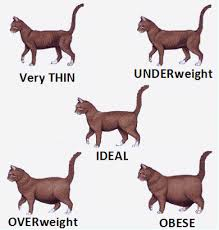 Overweight Cat, Fat Cat, Cat Diet, Pet Store | Goodness For Pets