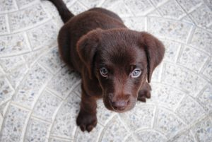 new puppy, pet store | goodness for pets