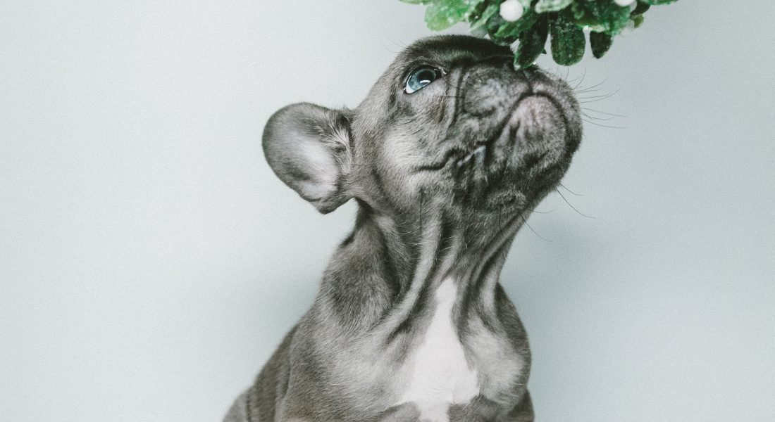 New Puppy Checklist, Prepare For Puppy, Pet Store | Goodness For Pets