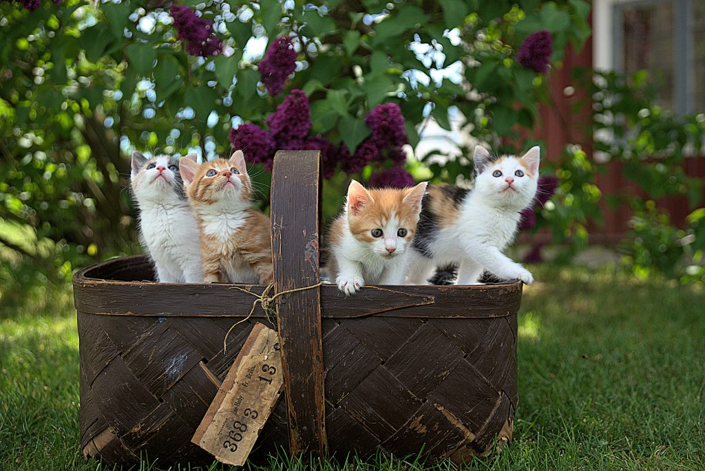 New Kitten Checklist, Pet Store | Goodness For Pets