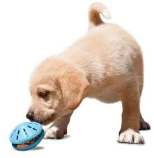 Lab puppy toy | Goodness for Pets