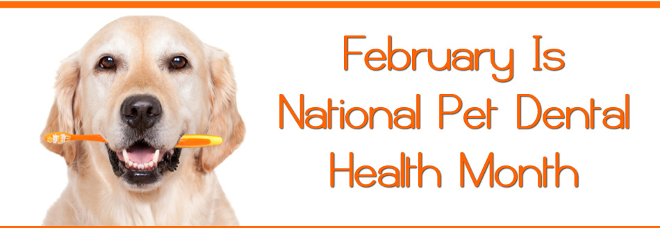 Pet Dental | Goodness for Pets
