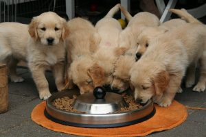 New Puppy Checklist, Puppy Supplies, Pet Store | Goodness For Pets