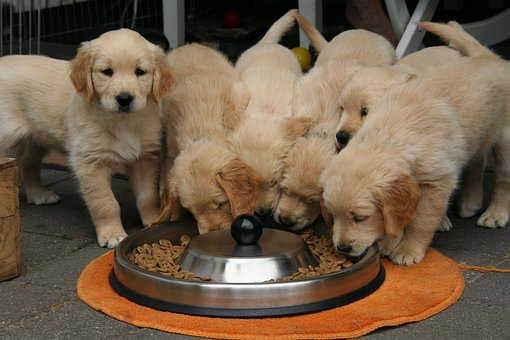 FDA DCM Dog Food   Goodness for Pets
