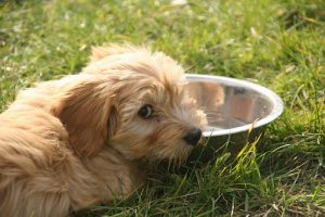 New Puppy Checklist, Dog Food and Water Bowls, Pet Store | Goodness For Pets
